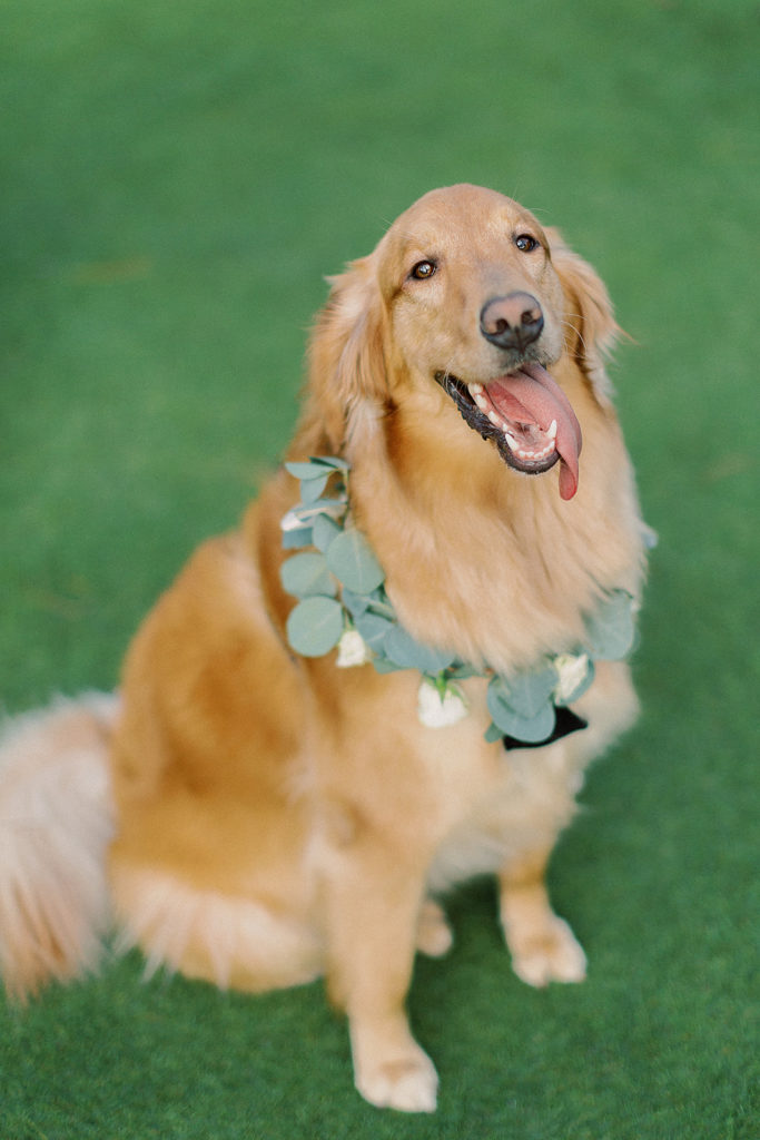 dog wedding attendent